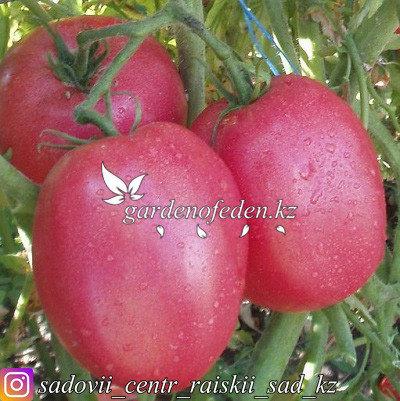 """Профессиональные семена. Томат """"Ляна розовая"""",20 штук ., фото 2"""