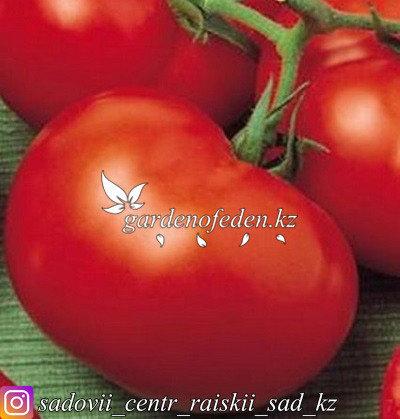 """Профессиональные семена. Томат """"Супер Ред F1"""",5 штук ., фото 2"""