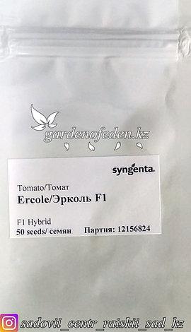 """Профессиональные семена. Томат """"Эрколь F1""""., фото 2"""