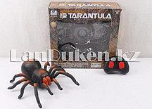 """Огромный паук на радиоуправлении Тарантул """"Tarantula"""" черно коричневый"""