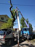 Спил деревьев, фото 7