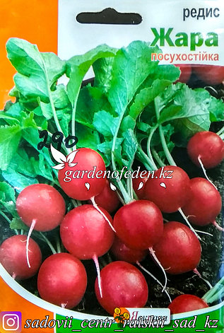 "Семена пакетированные Яскрава. Редис ""Жара"", фото 2"