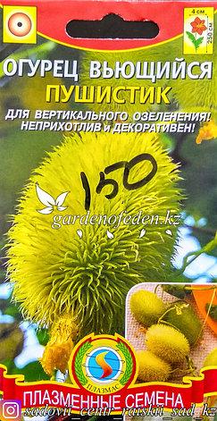 """Семена пакетированные Плазменные семена. Огурец Вьющийся """"Пушистик"""", фото 2"""