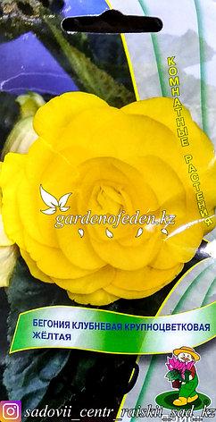 """Семена пакетированные Поиск. Бегония Клубневая крупноцветковая """"Желтая"""", фото 2"""