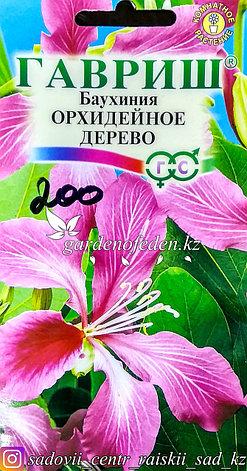 """Семена пакетированные Гавриш. Баухиния """"Орхидейное дерево"""", фото 2"""