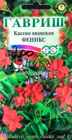"""Семена пакетированные Гавриш. Кассия яванская """"Феникс"""", фото 2"""