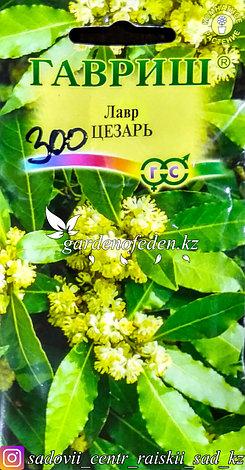 """Семена пакетированные Гавриш. Лавр """"Цезарь"""", фото 2"""