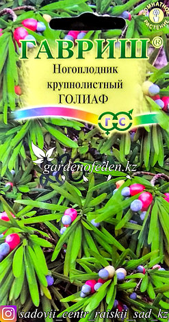 """Семена пакетированные Гавриш. Ногоплодник крупнолистный """"Голиаф"""", фото 2"""