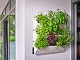 Пластиковые горшок настенный кашпо Green Wall single, фото 2