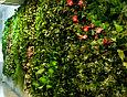 Фитостена из искусственных растений, фото 3
