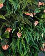 Фитостена из искусственных растений, фото 8