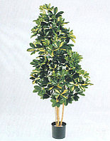Шеффлера натуральная пестрая (высота-140см)