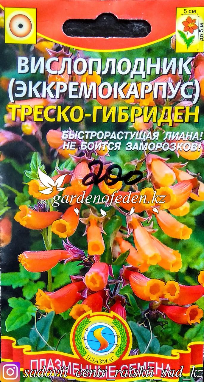 """Семена пакетированные Плазменные семена. Вислоплодник (Эккремокарпус) """"Треско-Гибриден"""""""
