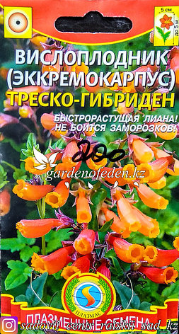 """Семена пакетированные Плазменные семена. Вислоплодник (Эккремокарпус) """"Треско-Гибриден"""", фото 2"""