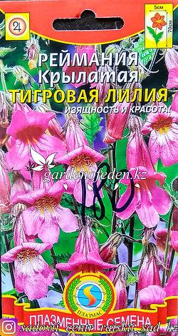 """Семена пакетированные Плазменные семена. Реймания крылатая """"Тигровая лилия"""", фото 2"""