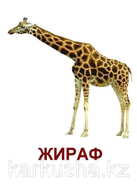 """Карточки Г. Домана """"Дикие животные"""""""