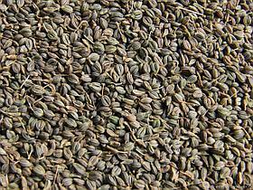 Семена петрушки профессиональные