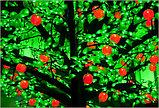"""Cветодиодное дерево """" Персик """" """"Яблоко"""", фото 2"""