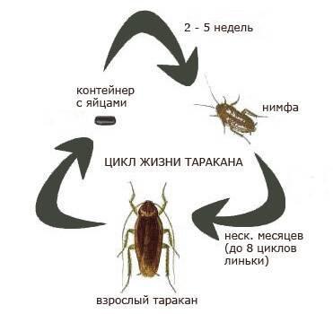 Уничтожение тараканов дезинсекция - фото 3