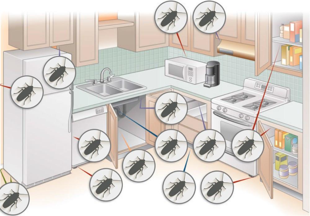 Уничтожение тараканов дезинсекция - фото 4