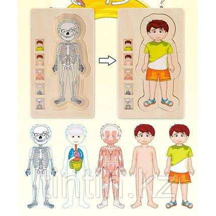 """Деревянный развивающий пазл """"Анатомия человека"""", фото 2"""