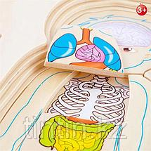 """Деревянный развивающий пазл """"Анатомия человека"""", фото 3"""