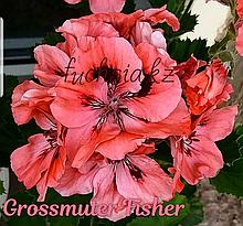 Grossmuter Fisher / укор.черенок