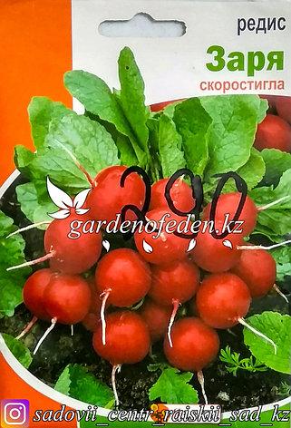 """Семена пакетированные Яскрава. Редис """"Заря"""", фото 2"""