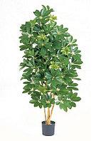 Шеффлера натуральная зеленая (высота - 170см)