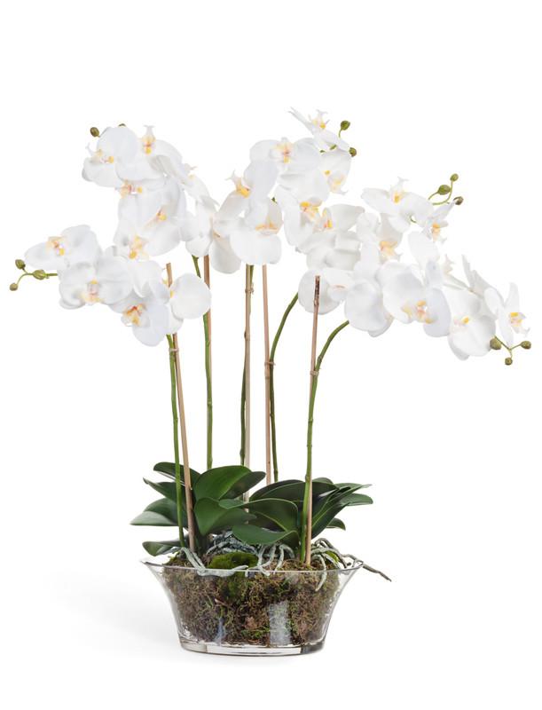 Орхидея фаленопсис белая в низкой вазе с мхом (высота - 70см)