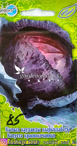 """Семена пакетированные Инвент+. Капуста краснокочанная """"Топарани"""", фото 2"""