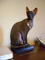 Кошки и котята различных пород