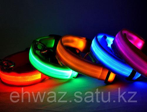 Светящийся ошейник для собак USB