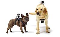 GoPro Крепление на собаку GoPro Fetch (Dog Harness)