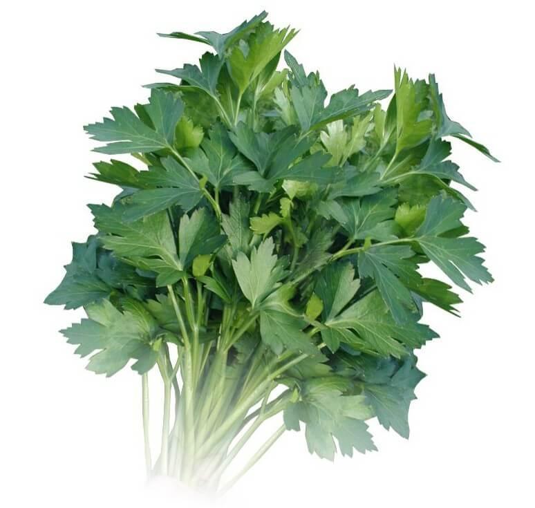 Семена петрушка весовые