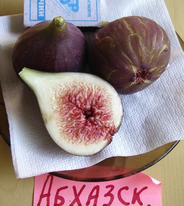 Инжир сорт Абхазский фиолетовый