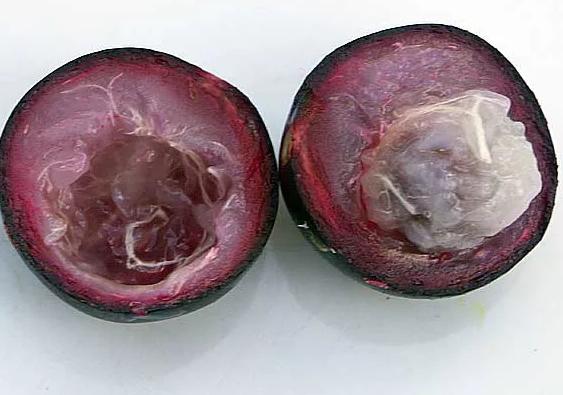Евгения Ромовая ягода