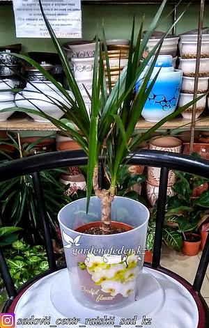 """Пластиковый горшок для орхидей """"Цветы"""". Цвет: прозрачный, 1.8л., фото 2"""