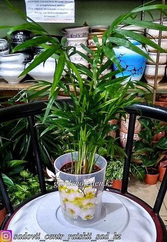 """Пластиковый горшок для орхидей """"Цветы"""". Цвет: прозрачный, 0.7л., фото 2"""