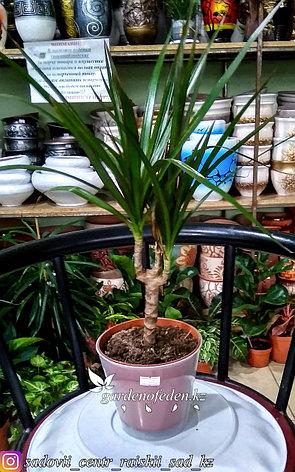 """Пластиковый горшок для орхидей """"Доляна"""". Цвет: прозрачный, 0.8л., фото 2"""
