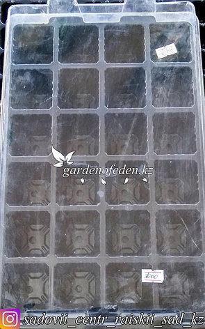 Набор для рассады. Пластиковая кассета на 24 ячеек., фото 2