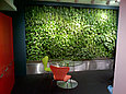 Озеленение помещений, фото 6