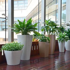 Горшки и кашпо для растений