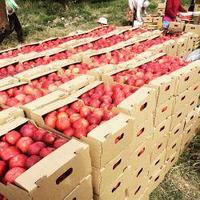 Коробки для яблок алматы 430*281*169