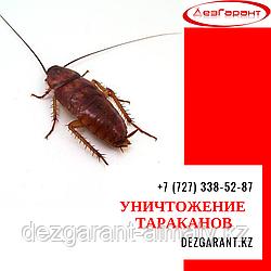 Уничтожение тараканов Алматы