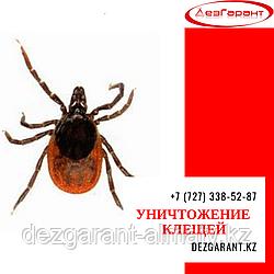 Уничтожение клещей Алматы