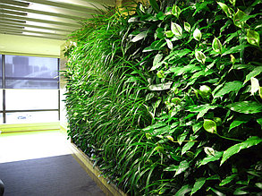 Вертикальная стена из живых растений