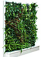 Живая вертикальная стена, фото 5