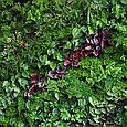 Фитостена вертикальная из живых растений, фото 2