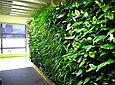 Фитостена вертикальная из живых растений, фото 3